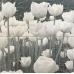 Сабаудия / Sabaudia Inserto Flower 448 x 448