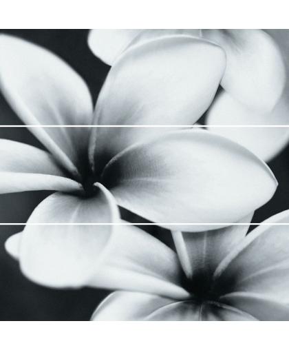 Flower grey composition 750 х 750
