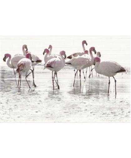 Элегант Стрипс / Elegant Stripes Inserto Flamingo 750 х 500 (под заказ)
